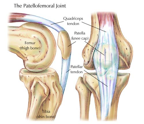 Calcification of the Knee Joints